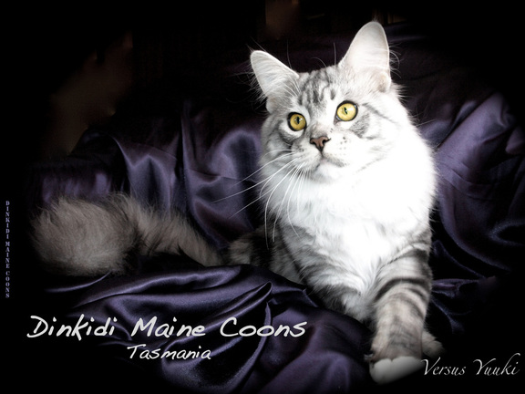 http://www.dinkidimainecoons.net